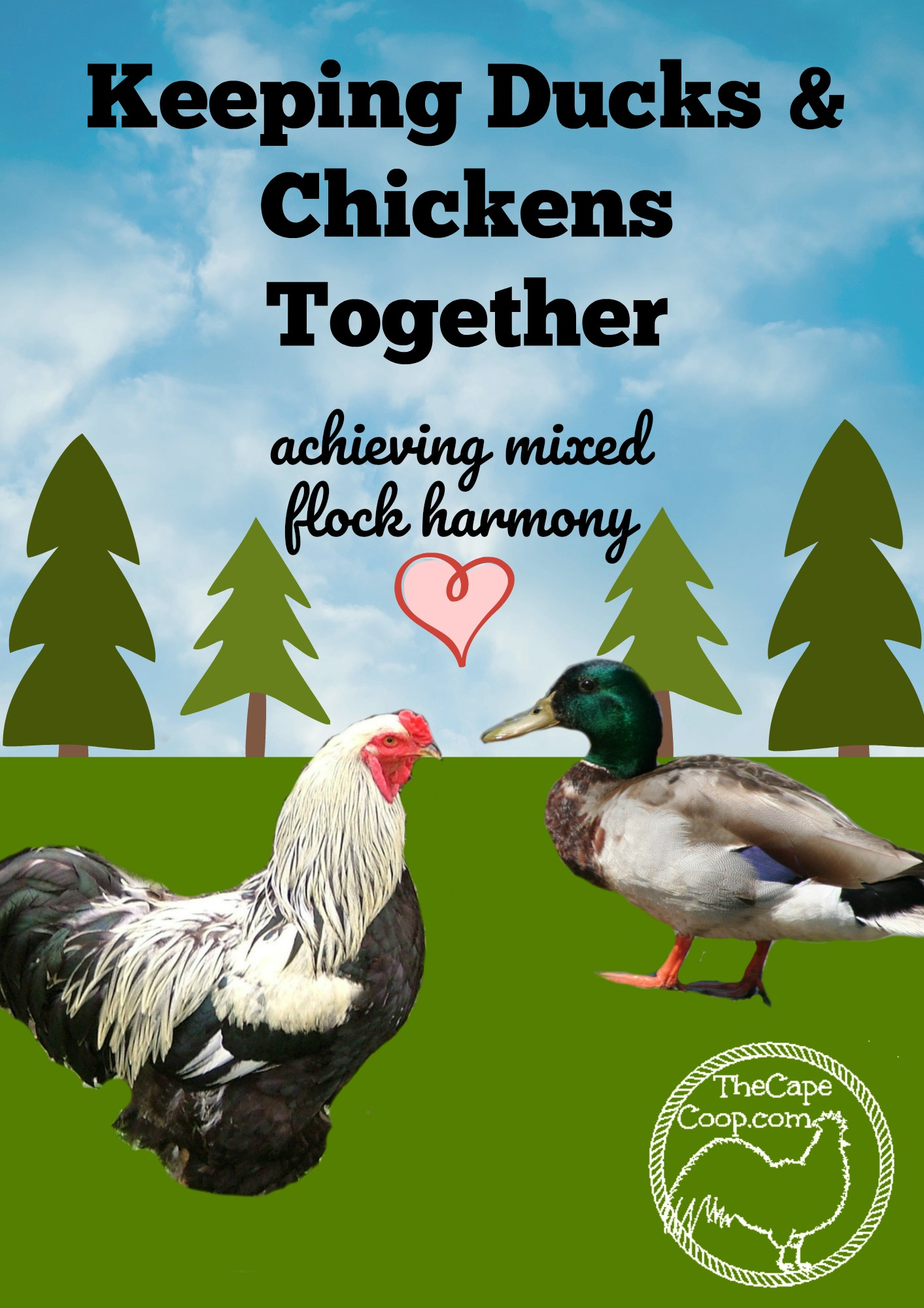 Raising Chickens Ducks Together The Cape Coop