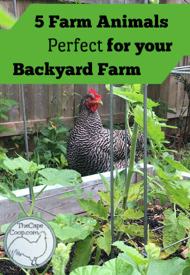 5 Farm Animals Perfect for your Backyard Farm