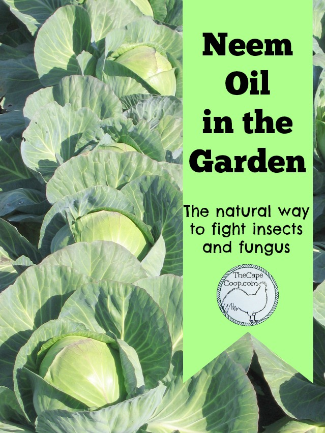 Neem oil in the garden, the natural way to fight insects & fungus