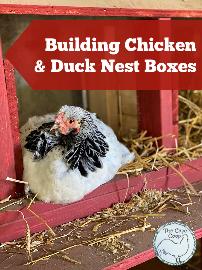 Building Chicken & Duck Nest Boxes